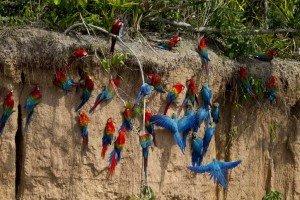 colpa-guacamayos-tours-peru-machupicchu