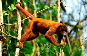 lago sandoval monos