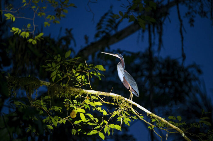 Jungla – Amazonia