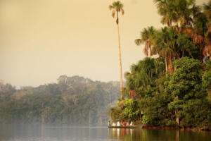 TPM-Amazonia10