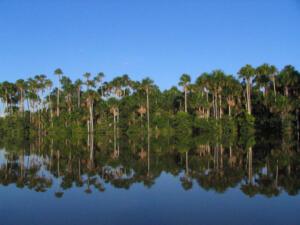 TPM-Amazonia4